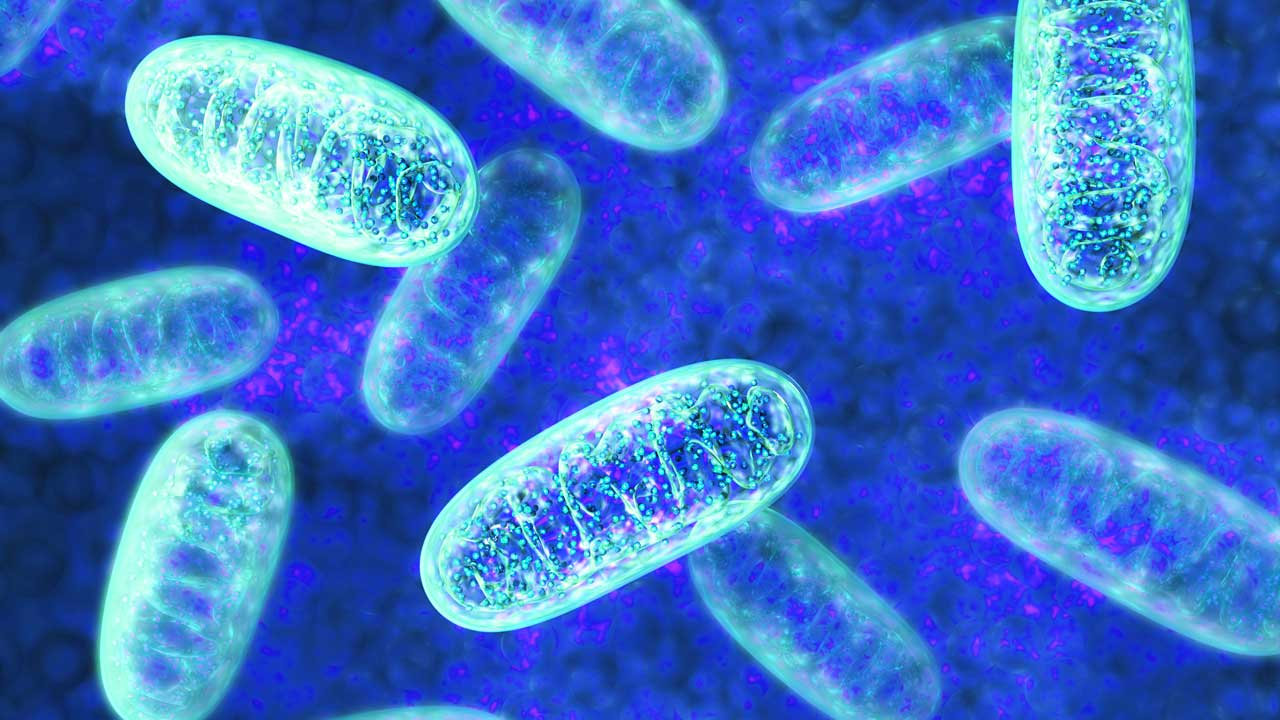 Arzt Praxis Gallwitz für Ernährungsmedizin: Jede Körperzelle besitzt ca. 1.500 Mitochondrien